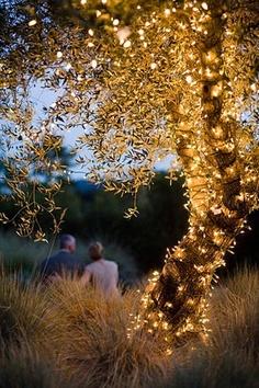 Autumn wedding lights in trees